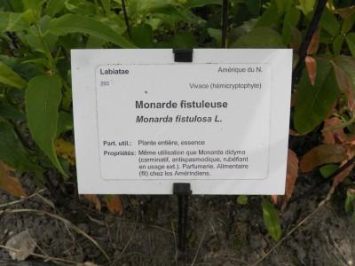 Au Conservatoire des Plantes médicinales de Milly la Forêt