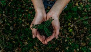 femme cueillant une plante