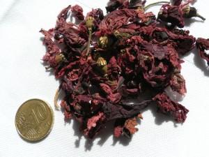 Pétales de coquelicots papaver rhoeas