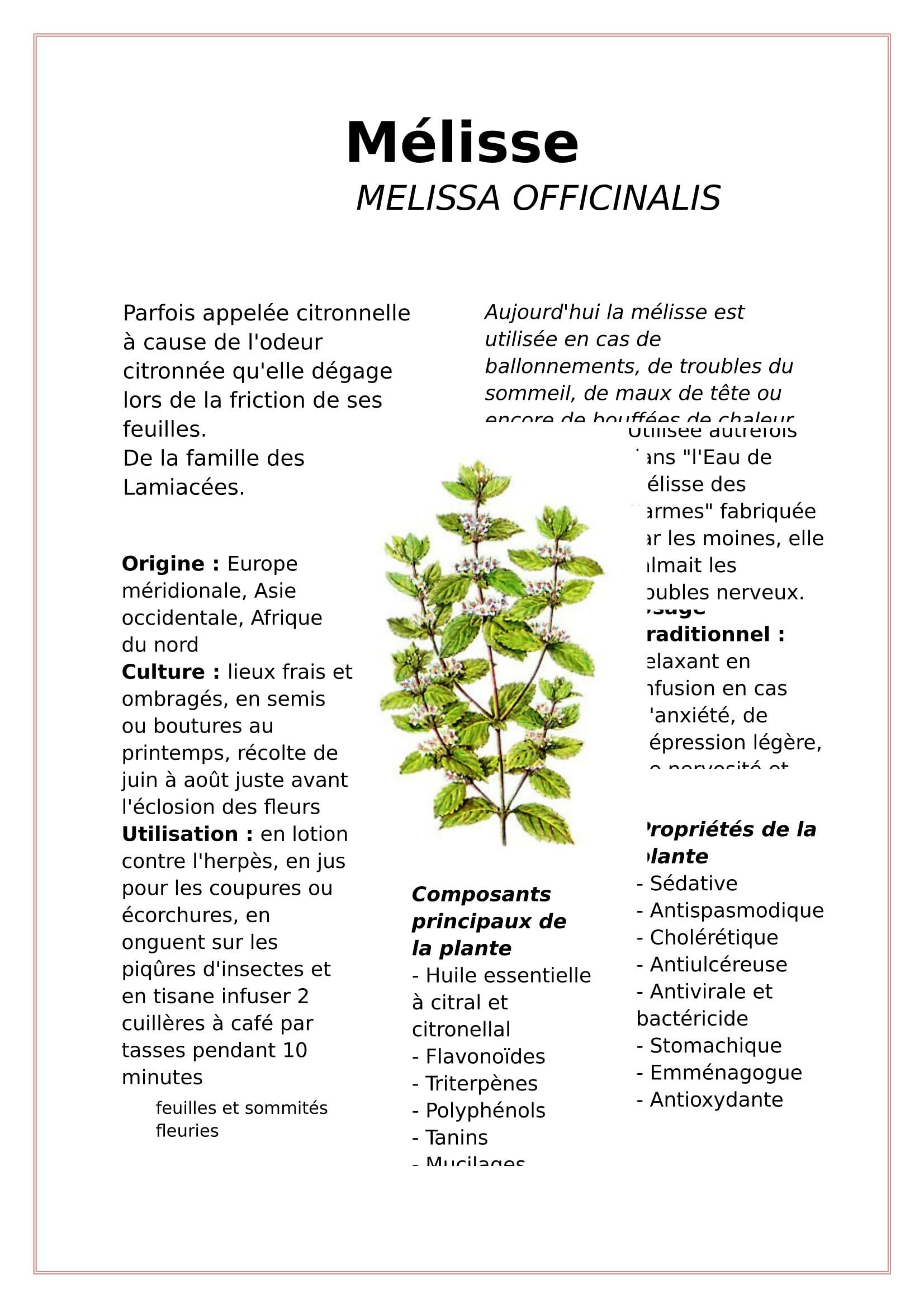 Mélisse-1