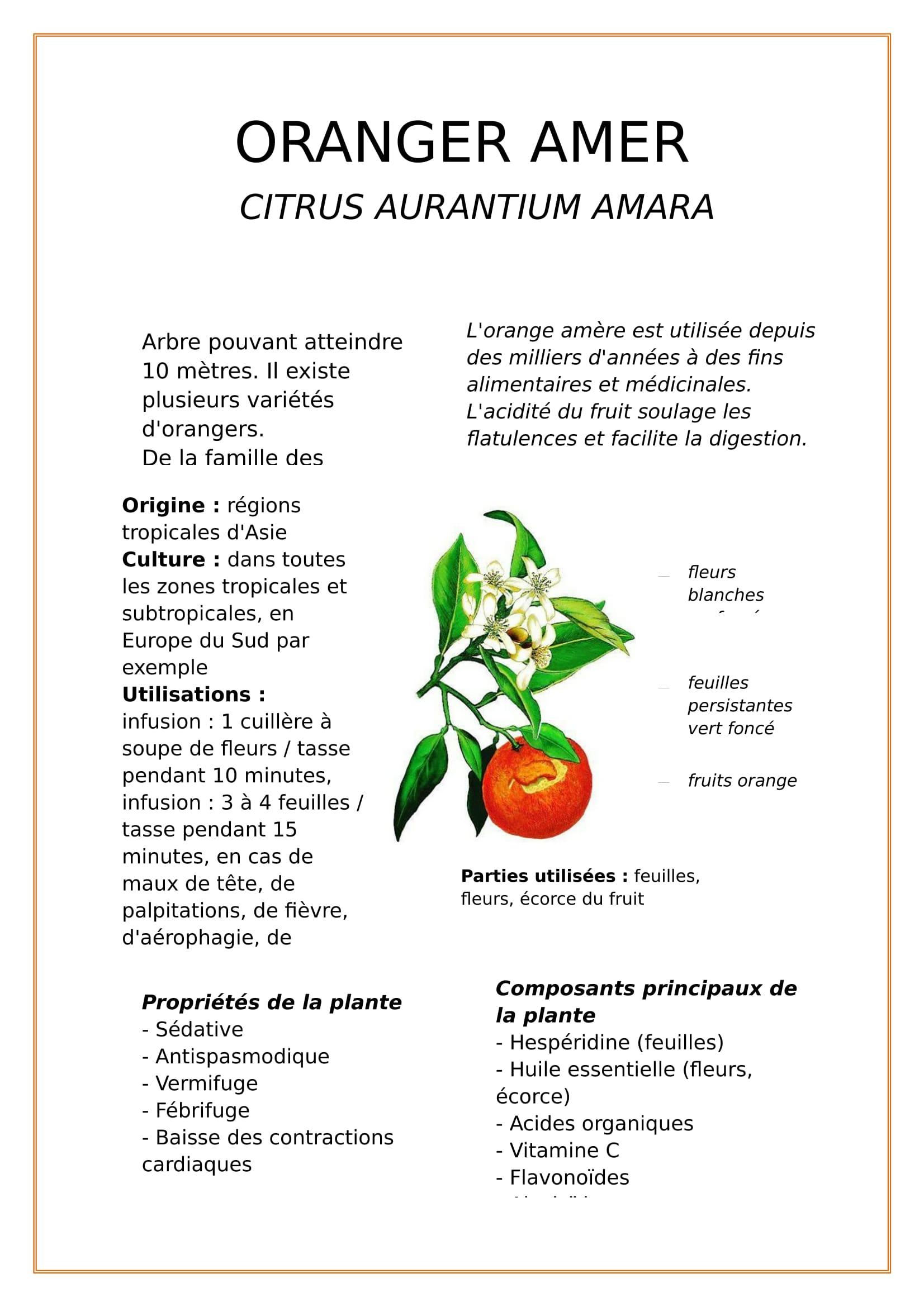 Oranger amer-1