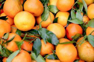 oranges ameres