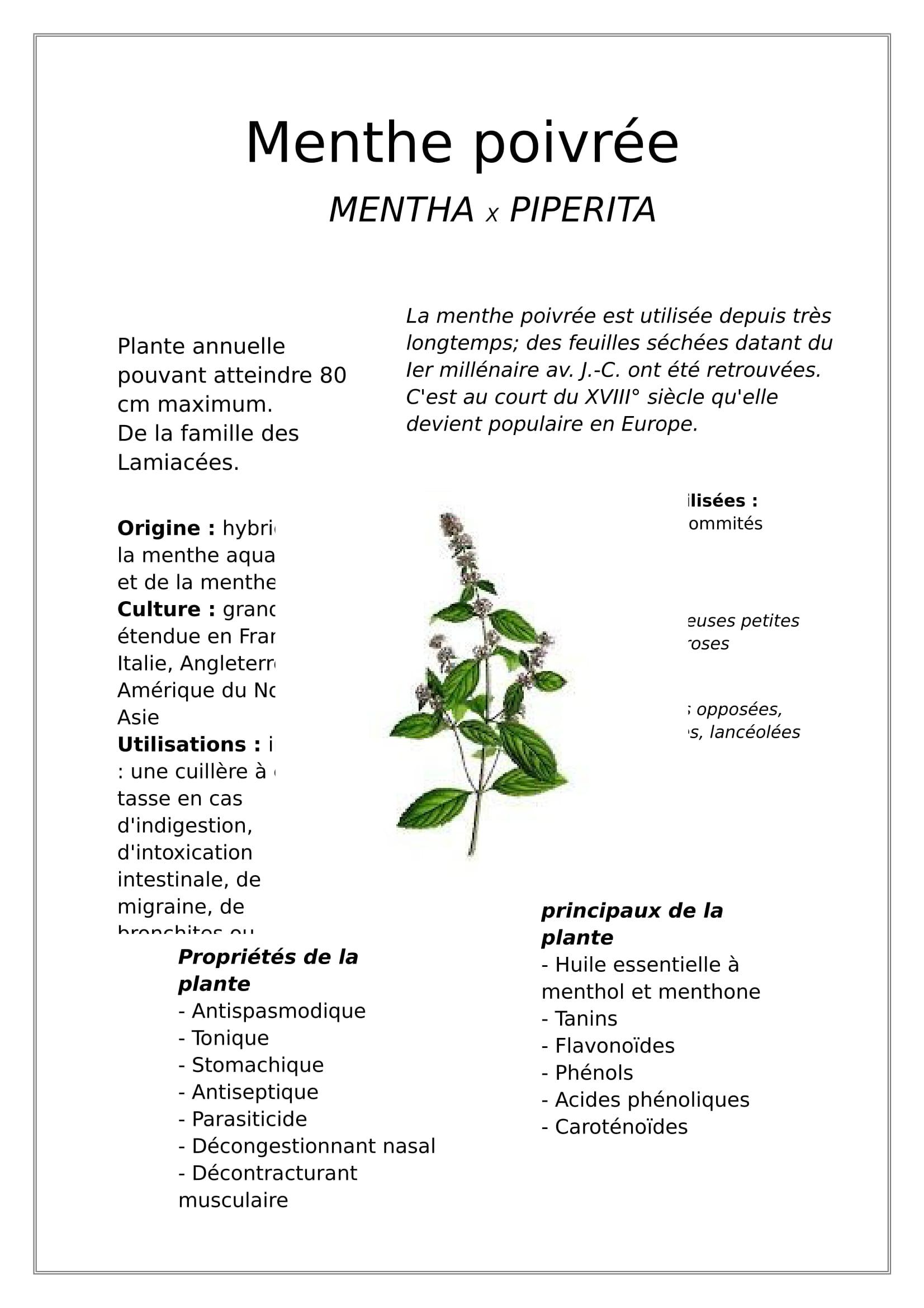 menthe poivrée-1