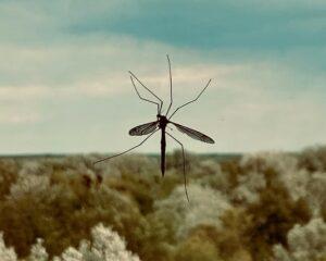 moustiques éloignés avec des produits naturels