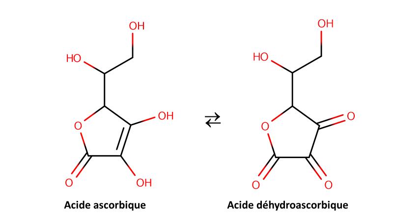 Compositions chimiques des plantes à vitamines C.