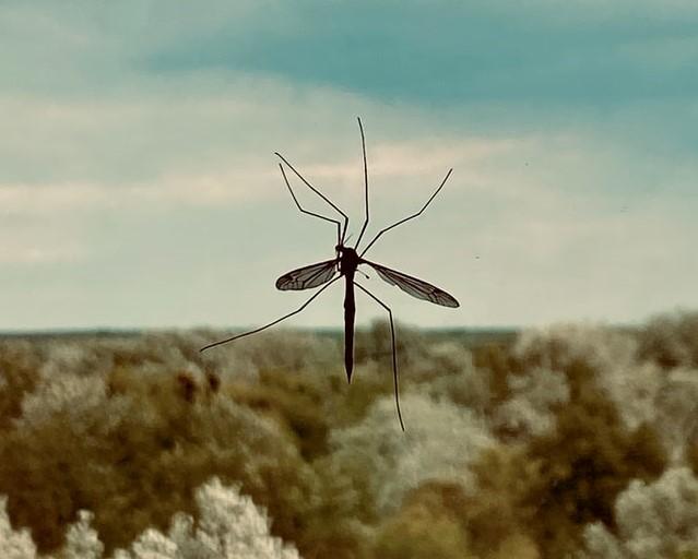 moustiques éloignées avec un produit naturel